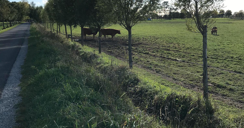 Zaun aus Weiden