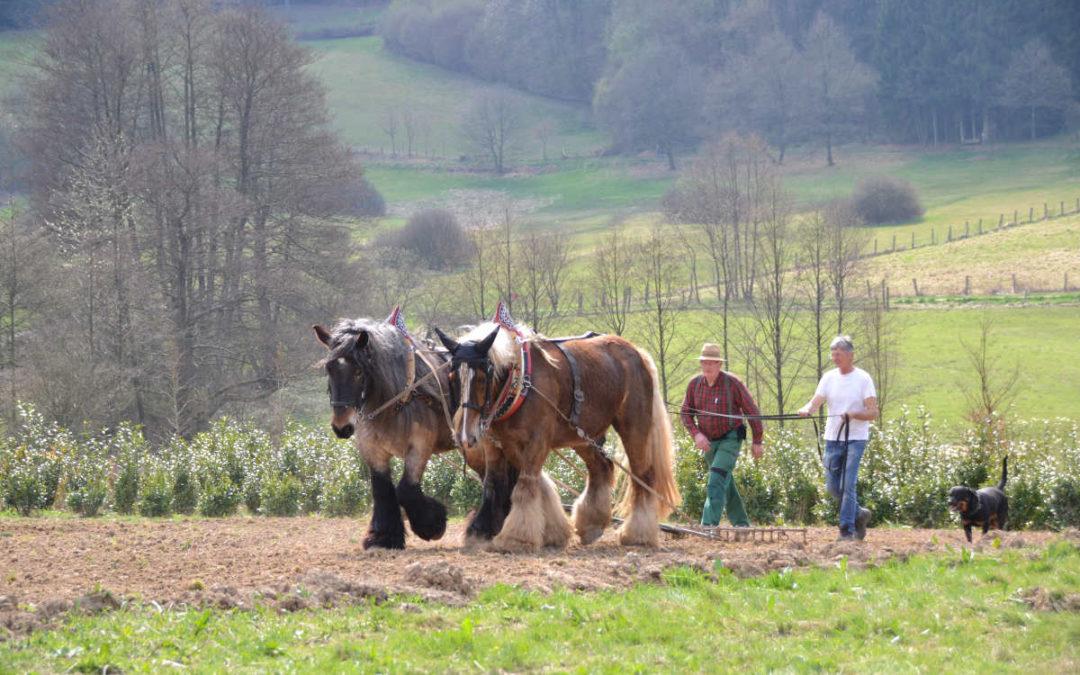 Acker-Workshop mit Arbeitspferden